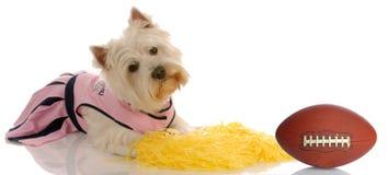 De hond van sporten Stock Foto's