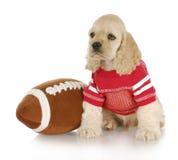 De hond van sporten Stock Fotografie