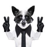 De hond van vredesvingers royalty-vrije stock afbeeldingen