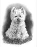 De Hond van Westie, de Tekening van het Potlood stock illustratie