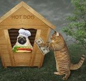 De hond verkoopt hotdogs royalty-vrije stock foto's