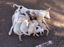 De hond voedt de puppy Royalty-vrije Stock Afbeeldingen