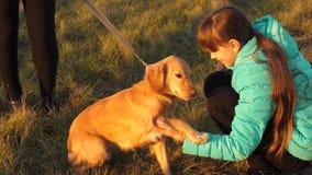 De hond voert bevel uit om eigenaarpoot te geven Het meisje loopt met hond stock footage