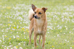 De hond voor een gang stock fotografie