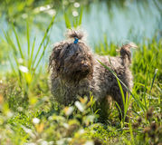 De hond wacht op eigenaar stock foto