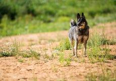 De hond wacht op eigenaar stock afbeeldingen