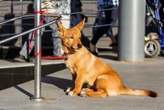 De hond wacht op de eigenaar bij de opslag stock afbeeldingen
