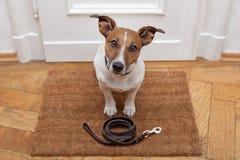 De hond wacht op het lopen met leiband stock foto