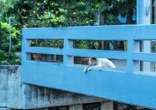 De hond wachtte op de eigenaar stock afbeelding