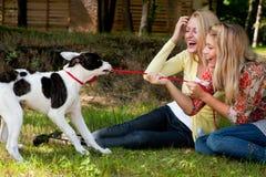De hond wint Stock Foto