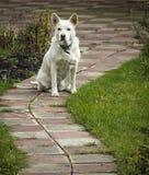 De hond zit Royalty-vrije Stock Afbeelding