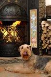 De hond zit Royalty-vrije Stock Foto's