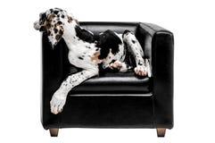 De hond zit als voorzitter Grappige Hond Geïsoleerde foto royalty-vrije stock afbeelding