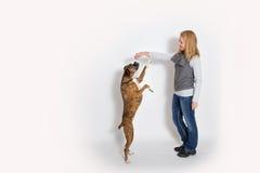 De hond zit omhoog voor een traktatie