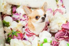 De hond zit omringd door bloemen Royalty-vrije Stock Afbeelding