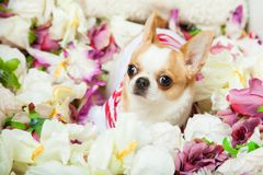 De hond zit omringd door bloemen royalty-vrije stock fotografie