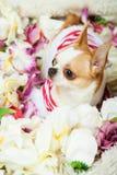 De hond zit omringd door bloemen Stock Foto