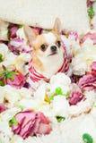 De hond zit omringd door bloemen Stock Afbeelding