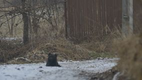 De hond zit op de Winterweg stock videobeelden