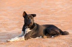 De hond zit op strandzand Royalty-vrije Stock Foto