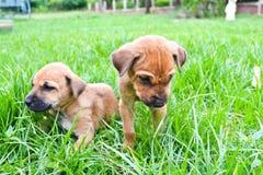 De honden Royalty-vrije Stock Fotografie