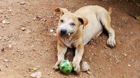 De honden bijten knagen aan op speelgoed stock foto's