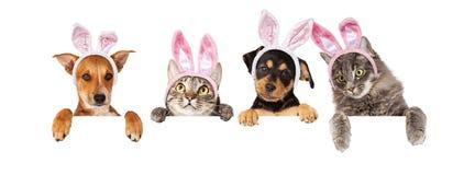 De Honden en de Katten die van Pasen over Witte Banner hangen stock foto