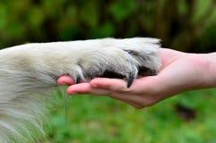 De honden handtastelijk worden menselijke hand Stock Afbeeldingen