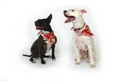 De honden luisteren Stock Foto's