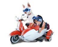 De honden van de autoped Stock Afbeeldingen