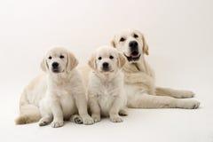 De honden van de familie stock afbeeldingen
