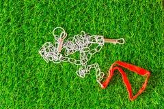 De honden van de kettingstolk op groene van de grastextuur eco als achtergrond bedriegen royalty-vrije stock foto