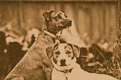 De Honden van de lithografie Stock Fotografie