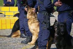 De honden van de politie royalty-vrije stock afbeeldingen