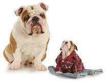 De honden van de vader en van de zoon royalty-vrije stock afbeeldingen