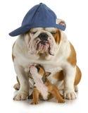De honden van de vader en van de zoon Stock Foto's