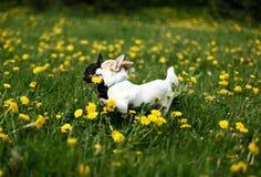 De honden van de vriendschap Stock Afbeeldingen