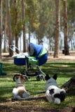 De honden van de wacht Royalty-vrije Stock Foto