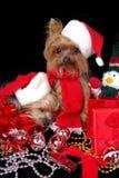 De honden van Kerstmis Stock Fotografie