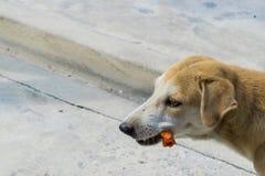 De honden zijn hongerig op een witte achtergrond Stock Foto's