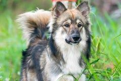 De honden zoeken een werkgever aan netto stock afbeeldingen