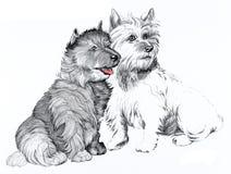 De hondenillustratie van Scottie Stock Fotografie