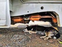 De hondenslaap, vermijdt de zon royalty-vrije stock afbeelding