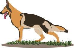 De hondillustratie van de Duitse herder Stock Foto's