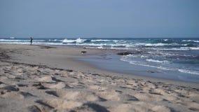De hondlooppas op strand het spelen wordt geamuseerd die stock videobeelden