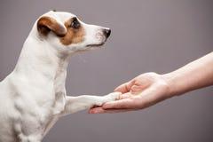 De hondpoot neemt de man royalty-vrije stock afbeeldingen