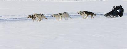De hondRas van de slee in Lenk/Zwitserland 2012 Stock Fotografie