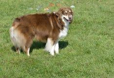 De honds Dagen van de Pret Royalty-vrije Stock Foto's