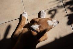 De hondslaap op de tegel royalty-vrije stock foto