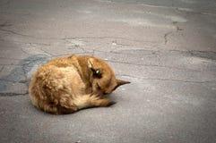 De hondslaap op de weg in de ochtend royalty-vrije stock foto's